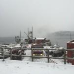 Bøfjord