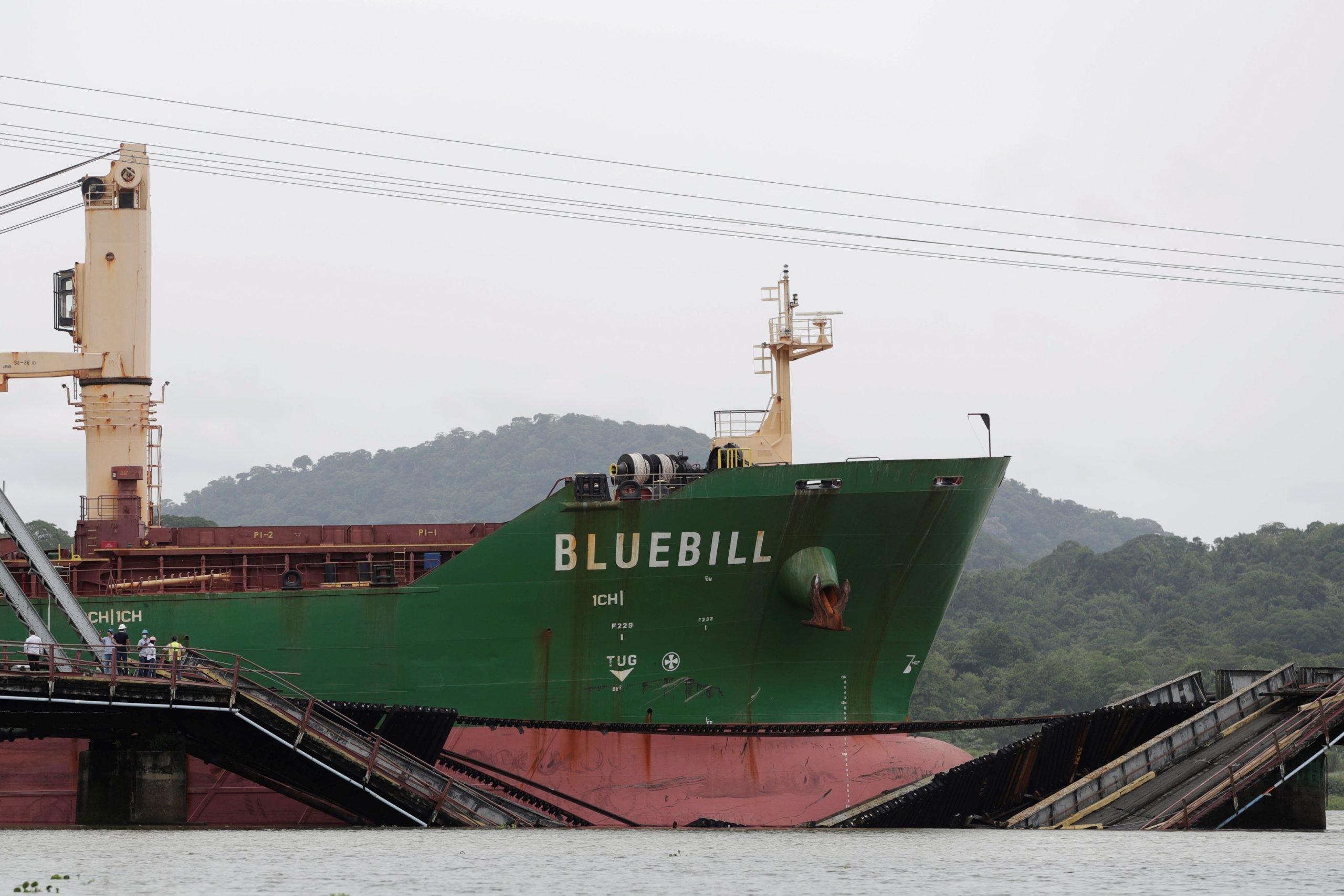 Bluebill
